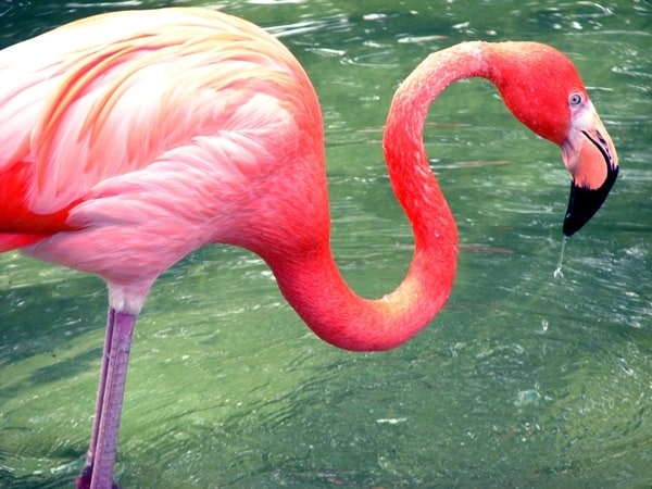 40-beautiful-pictures-of-pink-flamingo-birds-26