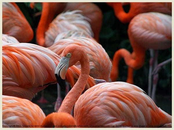 40-beautiful-pictures-of-pink-flamingo-birds-29