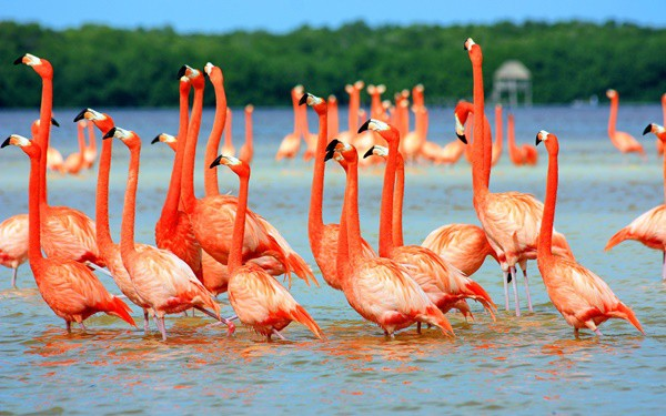 40-beautiful-pictures-of-pink-flamingo-birds-32