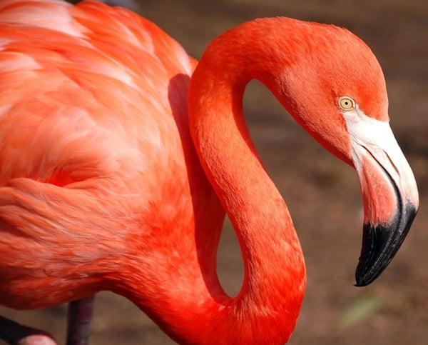 40-beautiful-pictures-of-pink-flamingo-birds-35