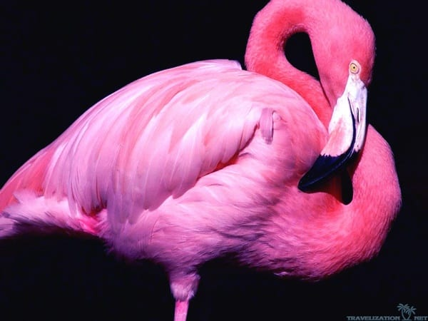 40-beautiful-pictures-of-pink-flamingo-birds-36