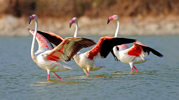 40-beautiful-pictures-of-pink-flamingo-birds-37