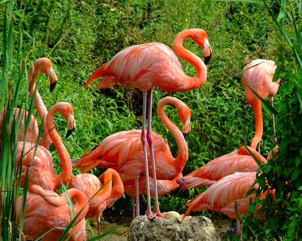40-beautiful-pictures-of-pink-flamingo-birds-8