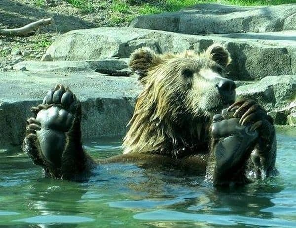 40-pictures-of-animals-chilling-in-pools-1