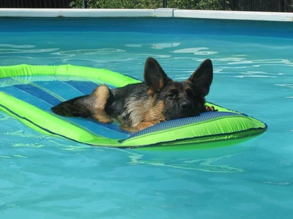 40-pictures-of-animals-chilling-in-pools-13