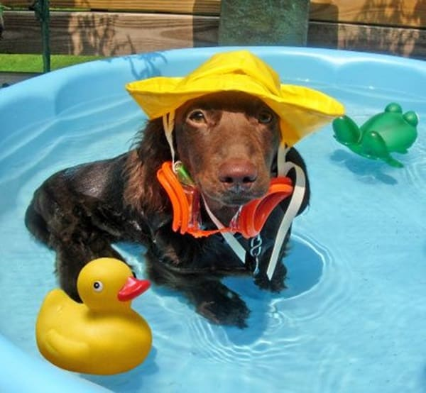 40-pictures-of-animals-chilling-in-pools-27