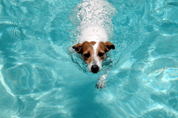 40-pictures-of-animals-chilling-in-pools-33