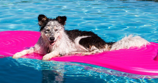 40-pictures-of-animals-chilling-in-pools-34