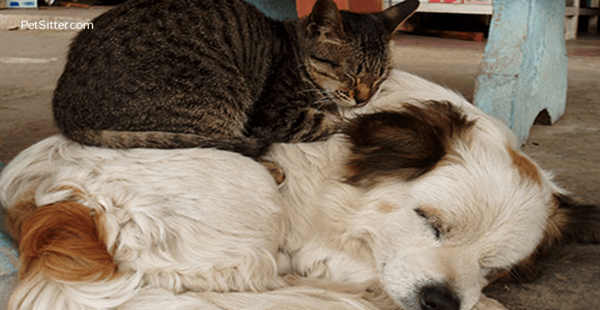dogs are better pets than cats essay Cats versus dogs has a common core research persuasive opinion argument even your most reluctant writers will enjoy creating an argument for the ideal pet.