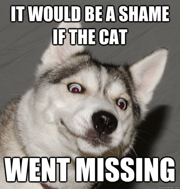 Dog Meme Husky 40 Pictures of Cute an...