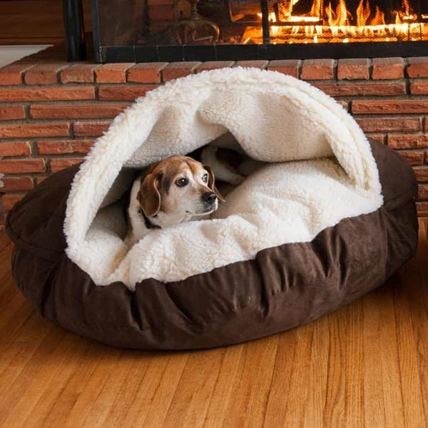 great-changes-in-your-house-that-your-dog-will-feel-comfortable-with-1