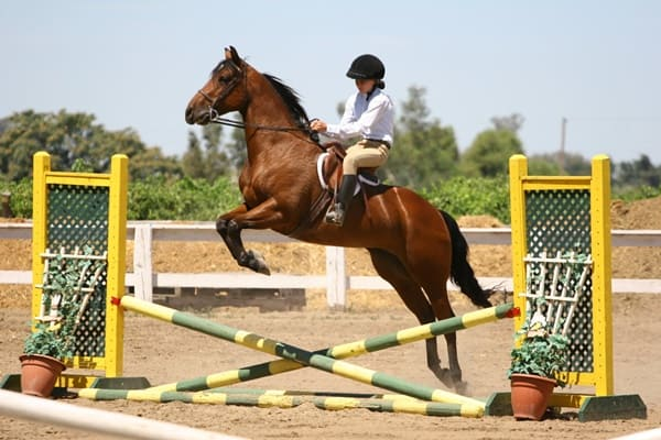 how-to-train-your-horse-to-jump-1