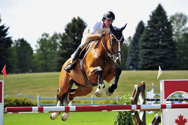 how-to-train-your-horse-to-jump-3