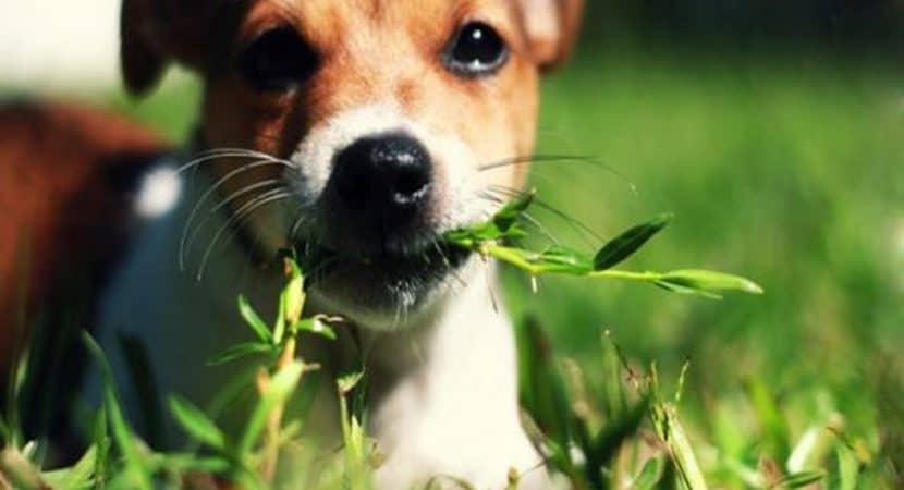 Dog Eats Plants Stop