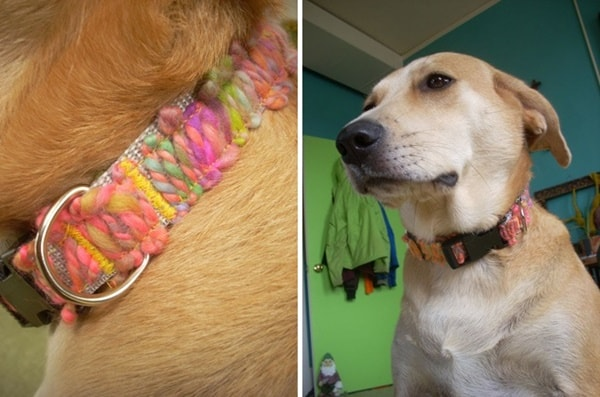 10-best-designer-dog-collar-ideas-5