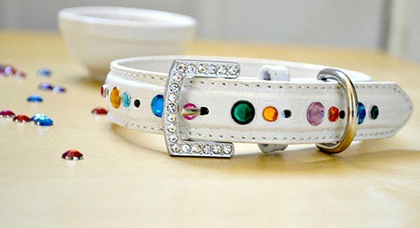 10-best-designer-dog-collar-ideas-8