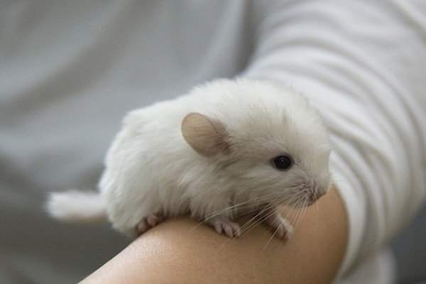 10 Examples Of Small Size Pets For Apartment