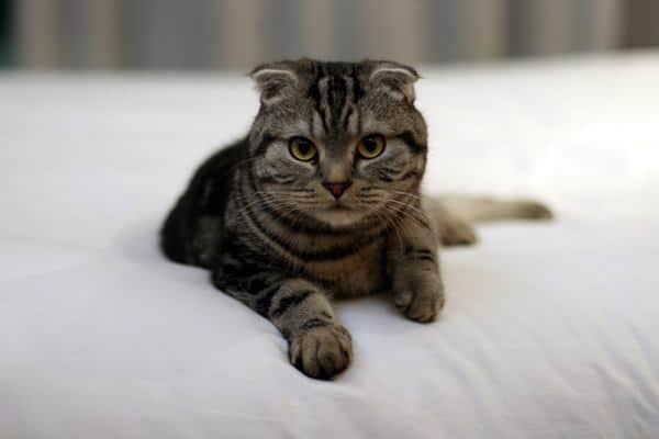 voice of salem the cat
