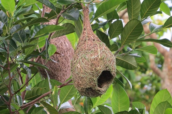 10-types-of-nests-of-different-bird-species-10