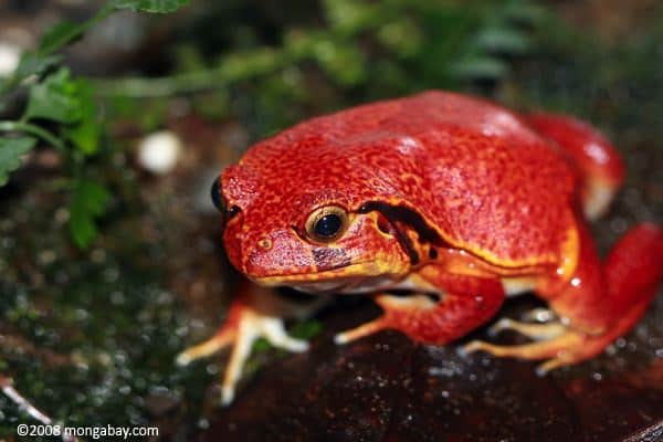20-beautiful-red-colored-animals-in-the-world-1