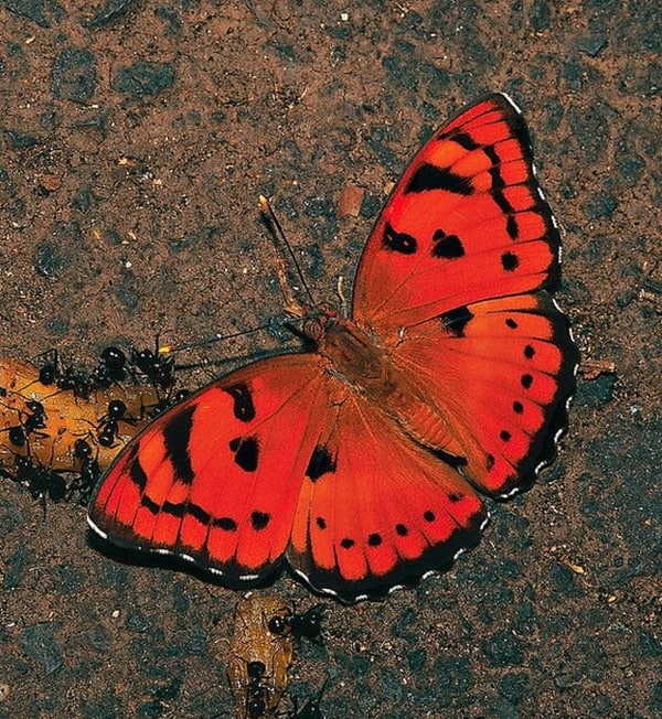 20-beautiful-red-colored-animals-in-the-world-10