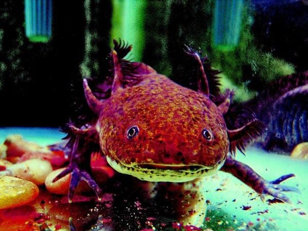 20-beautiful-red-colored-animals-in-the-world-16