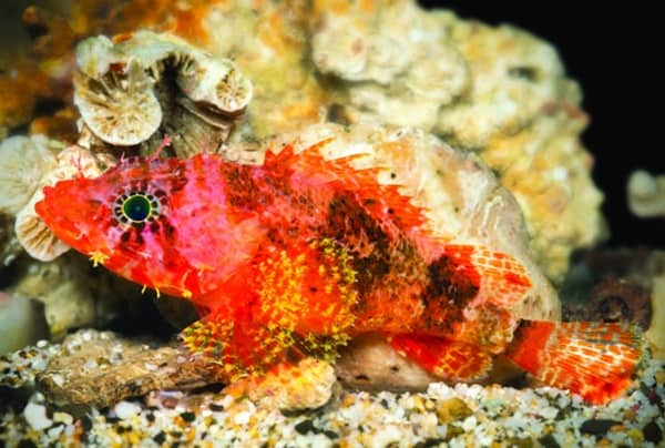 20-beautiful-red-colored-animals-in-the-world-18