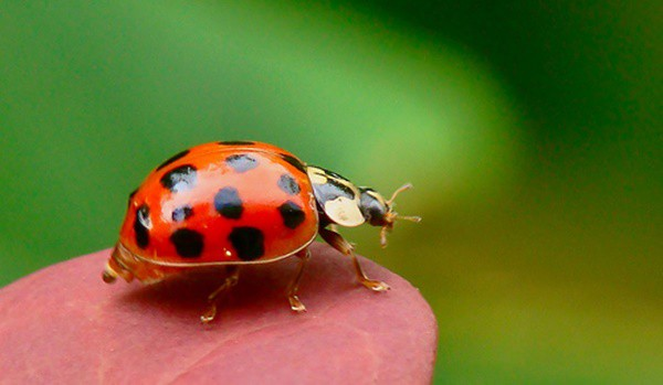 20-beautiful-red-colored-animals-in-the-world-2