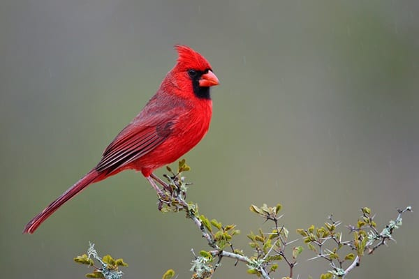 20-beautiful-red-colored-animals-in-the-world-6