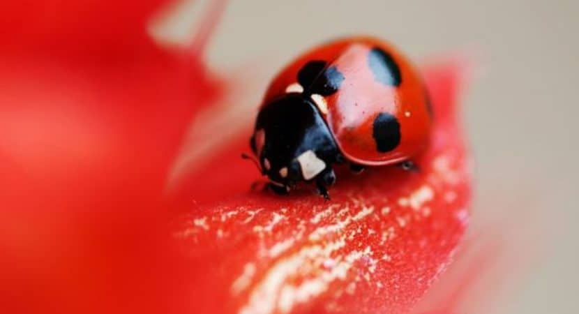 20 Beautiful Red Coloured Animals In The World