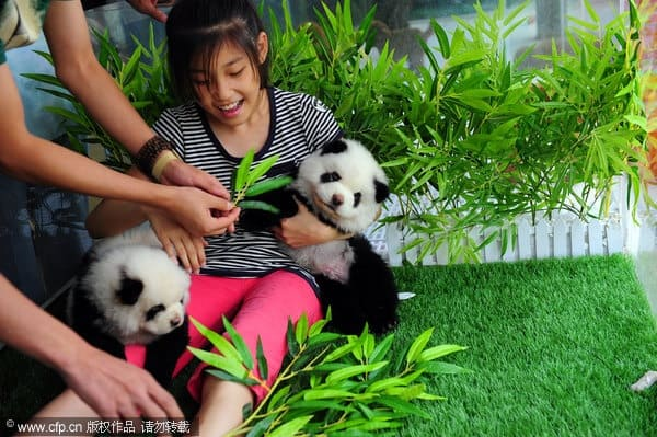 40-fluffy-pictures-of-puppies-that-looks-like-pandas-17
