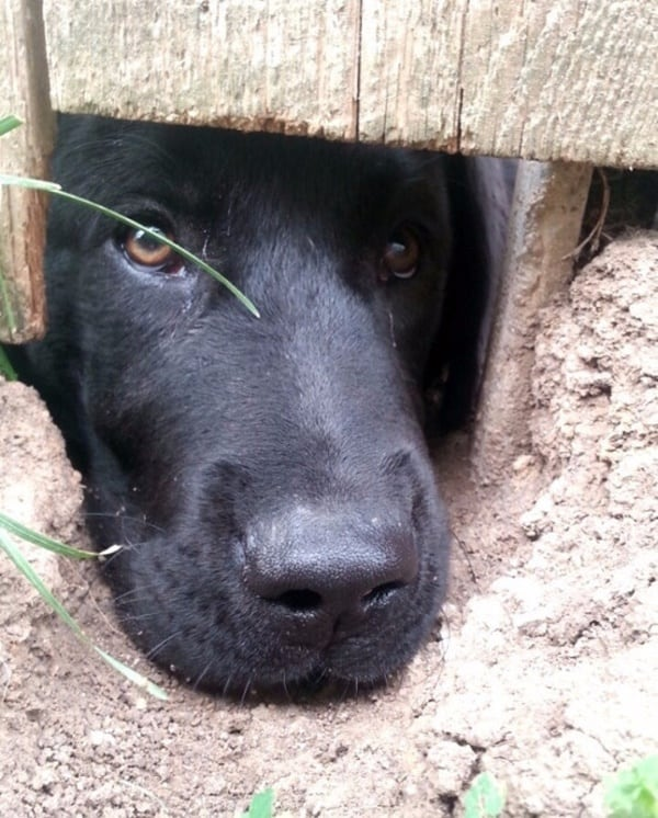 40-pictures-of-desperate-dogs-who-just-want-to-say-you-hi-17