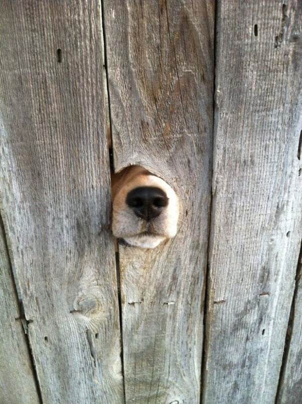 40-pictures-of-desperate-dogs-who-just-want-to-say-you-hi-2