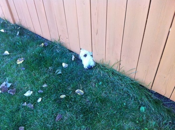 40-pictures-of-desperate-dogs-who-just-want-to-say-you-hi-37