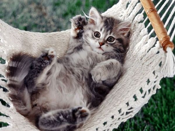 40-pictures-of-cute-silver-tabby-kittens-14