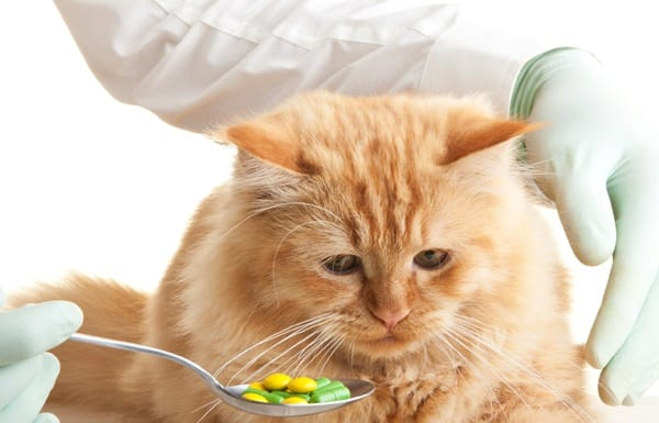 how-to-give-your-cat-or-dog-a-pill-3