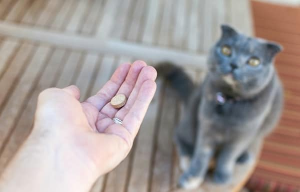 how-to-give-your-cat-or-dog-a-pill-4