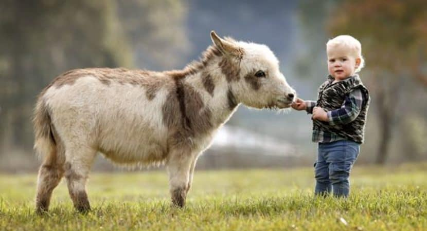 15 Surprising Miniature Donkey Facts And Information
