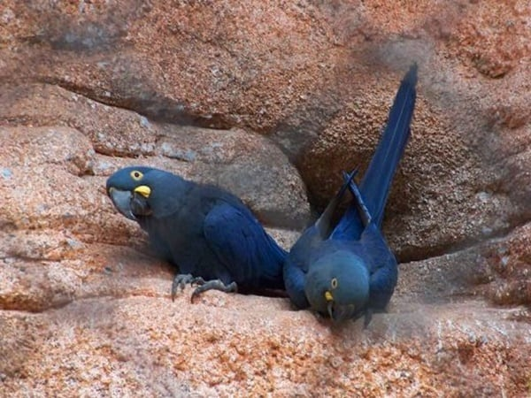 40-naturally-ocurring-blue-colored-animals-27