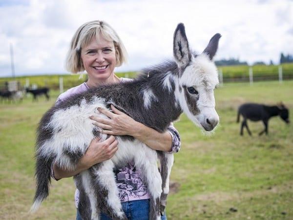 15-surprising-miniature-donkey-facts-1