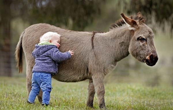 15-surprising-miniature-donkey-facts-3
