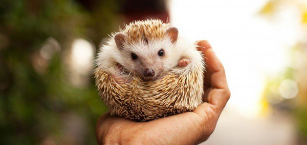 5-exotic-small-size-pets-for-kids-1
