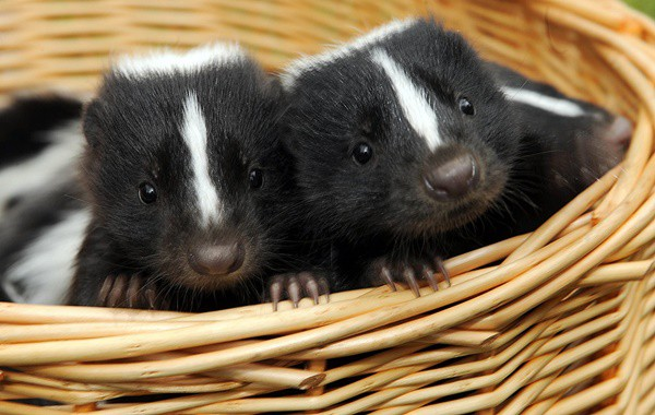 5-exotic-small-size-pets-for-kids-3