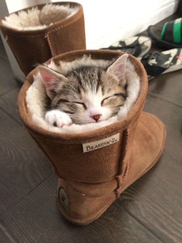 cute pictures of pet can sleep anywhere 1