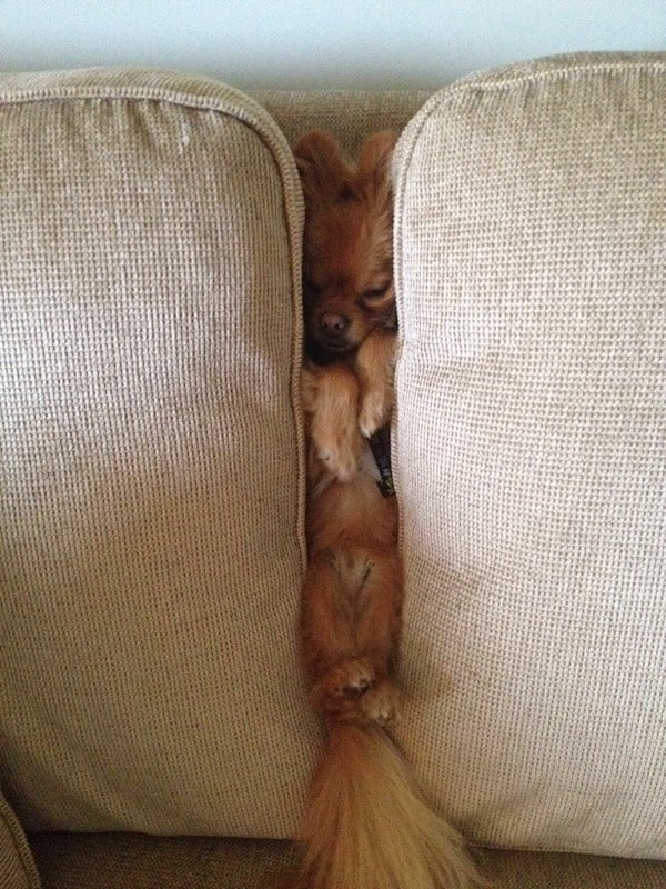 cute pictures of pet can sleep anywhere 20