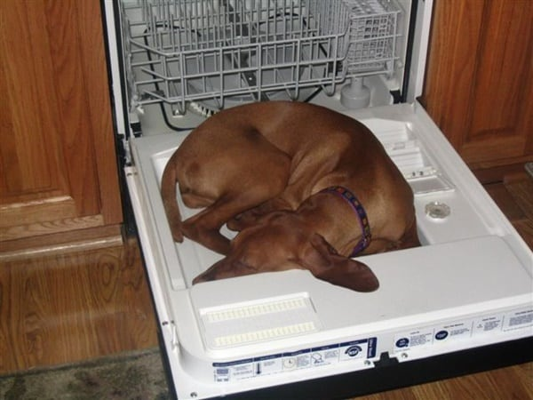 cute pictures of pet can sleep anywhere 21