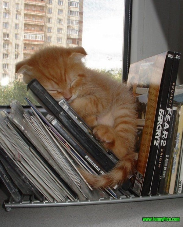 cute pictures of pet can sleep anywhere 29