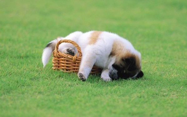 cute pictures of pet can sleep anywhere 36