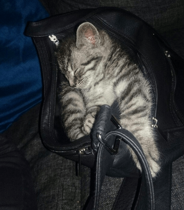 cute pictures of pet can sleep anywhere 37