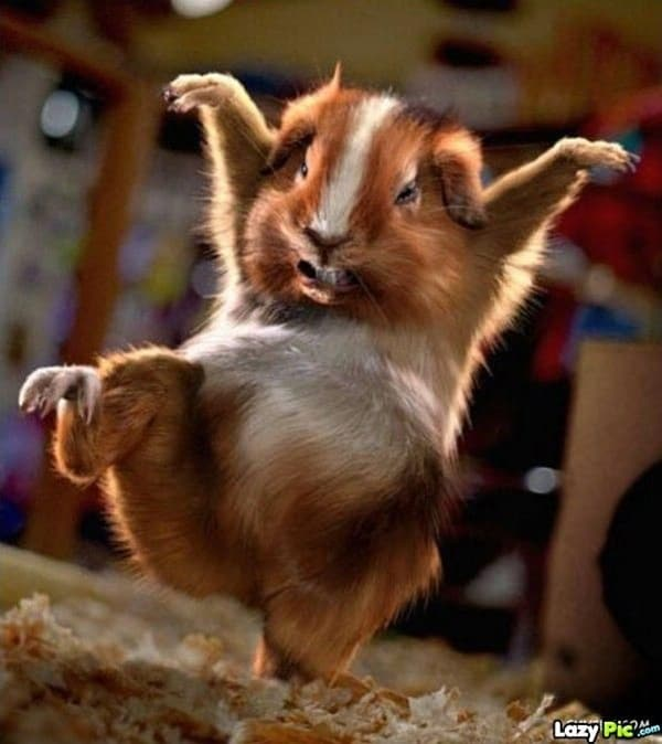 funny-pictures-of-dancing-animals-12.jpg